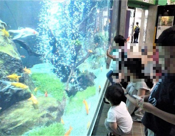 金魚の大水槽に貼り付く子供達