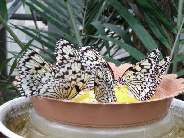 うじゃうじゃいる蝶
