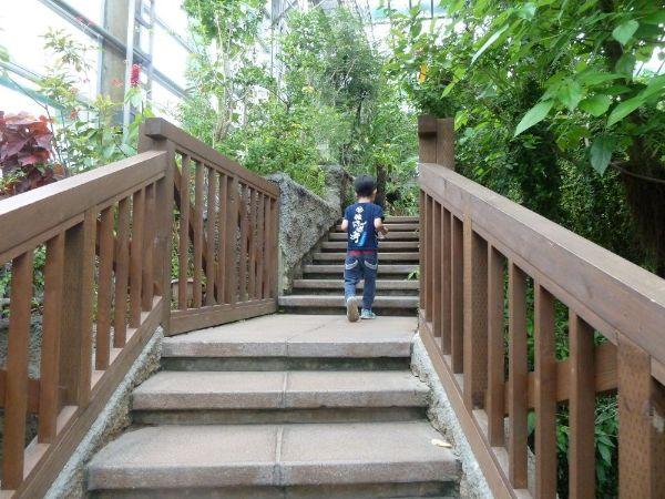 大温室の階段