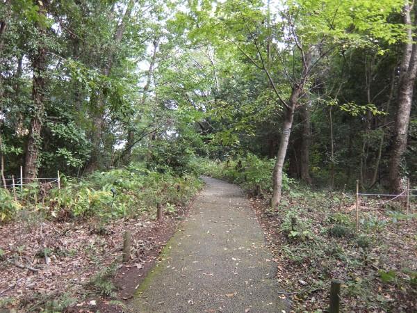 「つたの森」に続く道