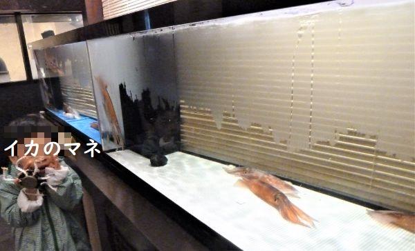 活イカの水槽